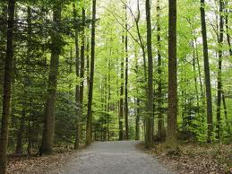 forest imagesCAH0BIEH